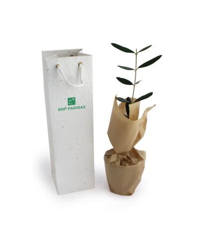Plant en sac à semer